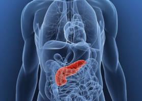 Поджелудочная железа расположена в брюшной полости