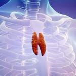 Ультразвуковое исследование вилочковой железы у детей
