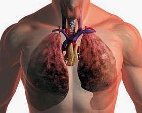 Схема расположения легких человека